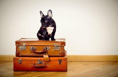 ¿Cómo es viajar… sin mascotas?