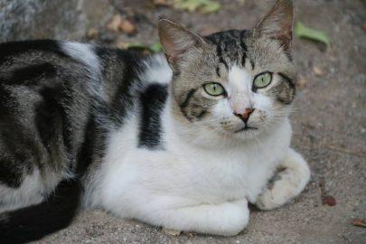 Abandonan gato… ¡con todo y todo!