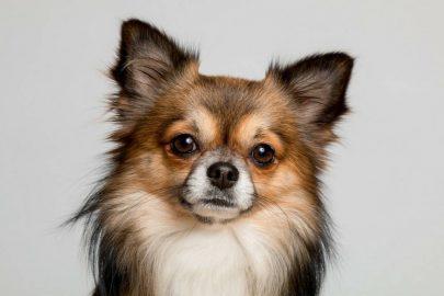 Perros pequeños… ¿sí o no?