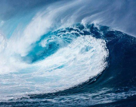 Perrita surfista… ¡toda una profesional!
