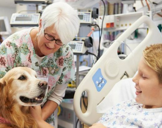 ¡El hospital donde te visitan tus mascotas!
