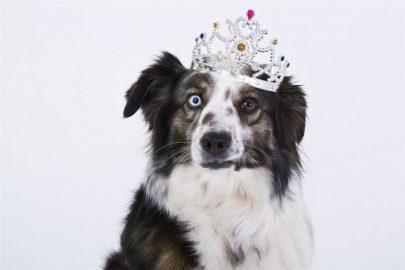 ¿Qué sienten tus mascotas realmente?