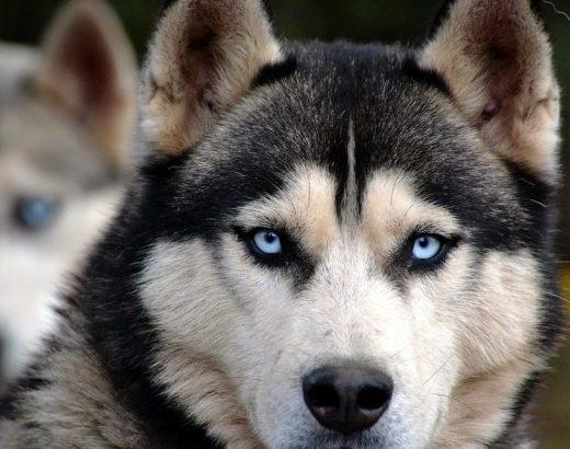 Los perros entienden mucho más… ¡Entérate!