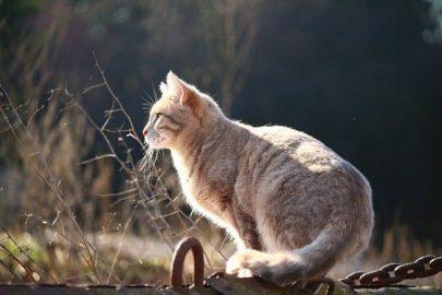 ¿Sabes cuántas vidas tienen los gatos?