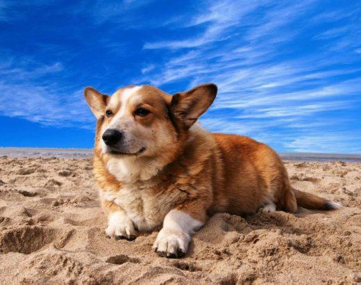 ¿Tu perro tiene un golpe de calor?