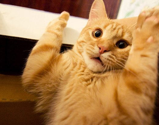 Gatos  súper graciosos … te alegrarán el día