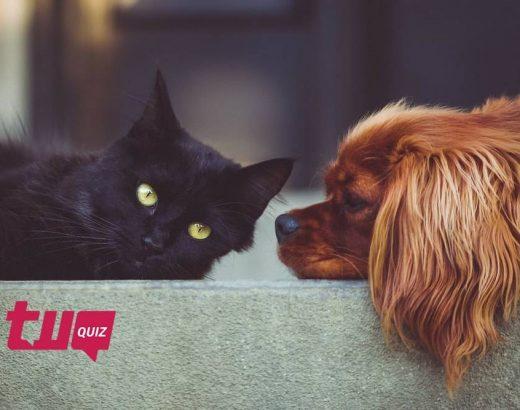 ¿Qué tanto sabes sobre mascotas?