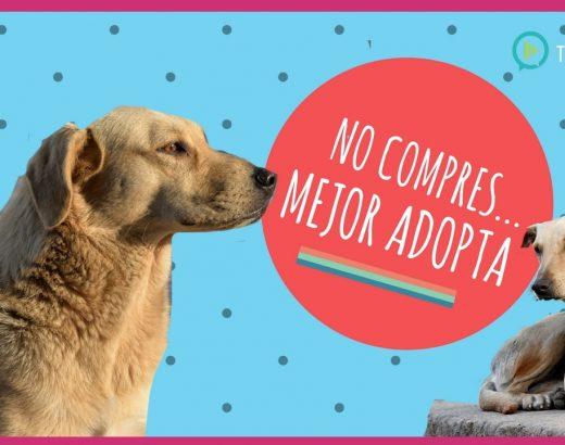 No compres mascotas… mejor ¡adopta!