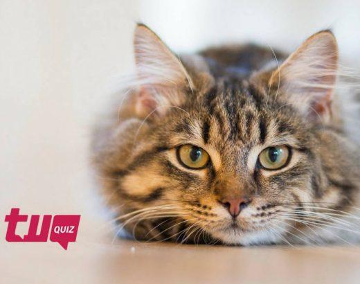 ¿Qué tan bien interpretas a los gatos?