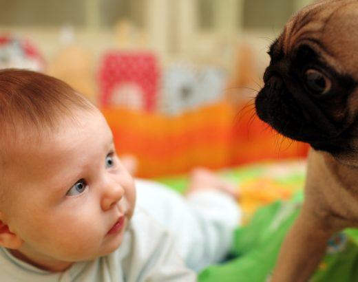 Bebés y perros… ¡Los beneficios!