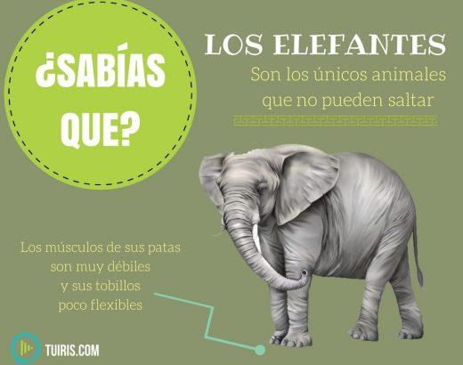 ¡Los elefantes no pueden saltar…!