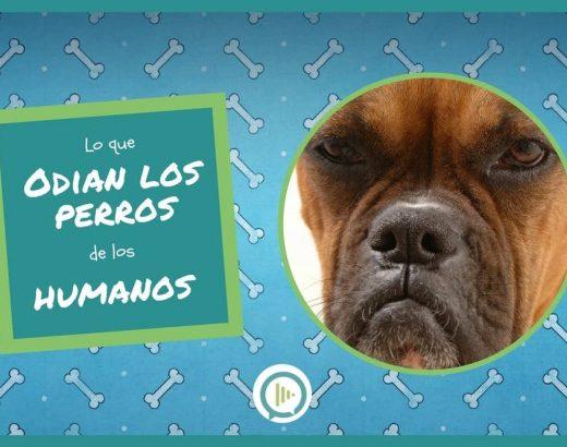 ¡5 cosas que los perros odian de los humanos!