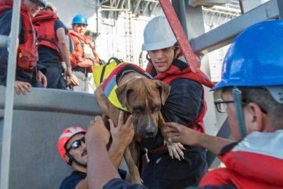 ¡Mujeres y perros rescatados en el Pacífico!