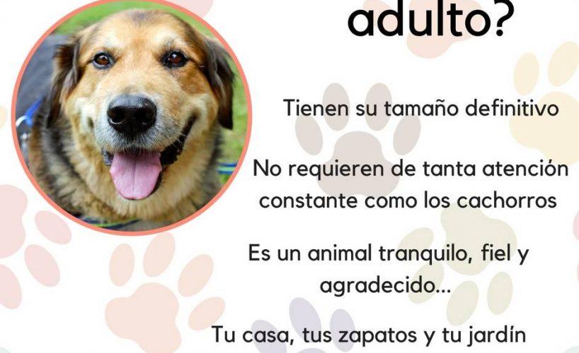 ¿Por qué adoptar?
