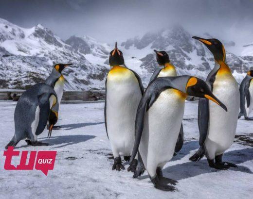 ¿Cuánto sabes sobre pingüinos? ¡Pruébate!