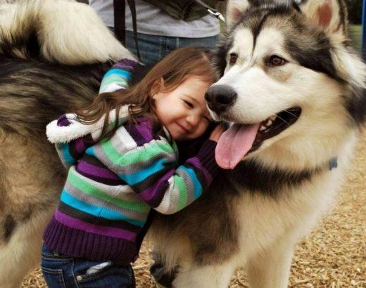 ¡Los perros son genéticamente sociables!