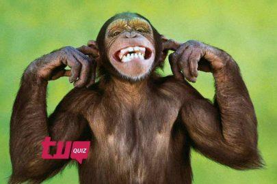 ¿Conoces las especies de estos monos?