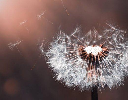 Hoja de otoño o flor de primavera… ¿Cómo quieres vivir?
