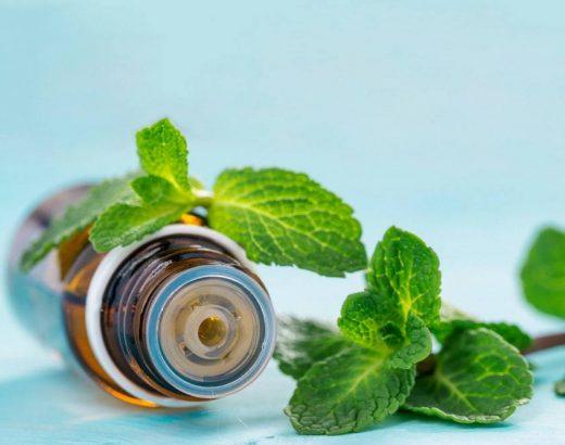 Stevia y otros endulzantes … ¿cuál es mejor?